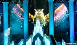 EDC-2014-Owl-Background-Day-1.2